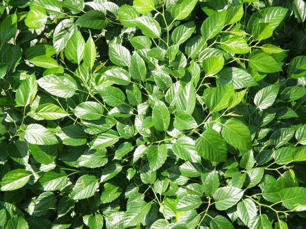 島Herbs/沖縄の薬草一覧