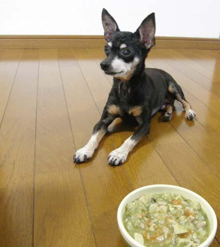 シニア犬に優しい基本の手づくりご飯