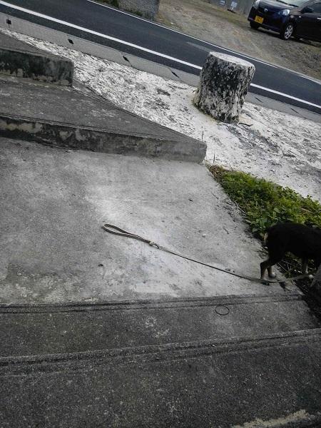 タカマサイ公園の階段