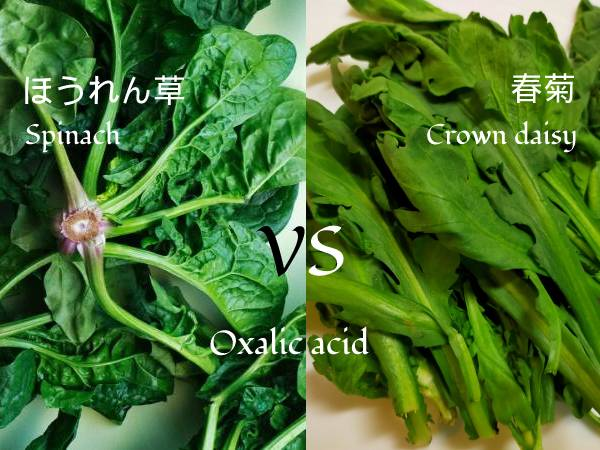ほうれん草と春菊。シュウ酸が多いのはどっち?