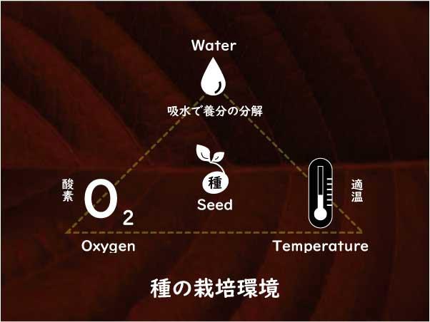 種の栽培環境