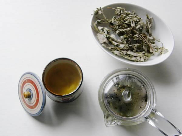 血行促進!お肌、肩こり、疲れた体にフーチバー茶が効くワケ