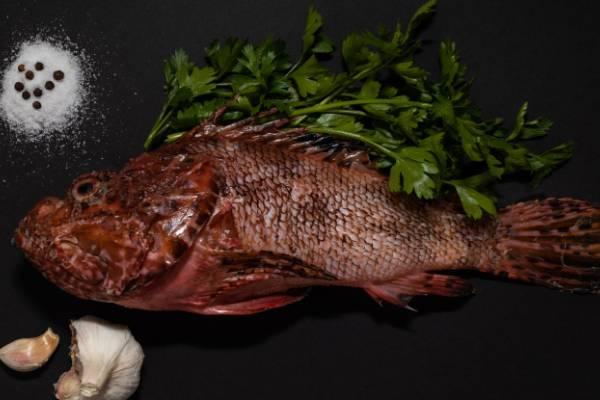 お魚に合うハーブを探せ!まずはここから。