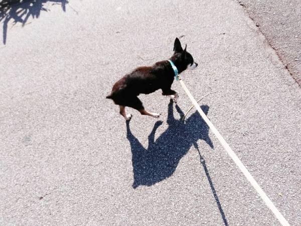 下手な散歩は犬を不幸にしている?!今から始めよう!犬の散歩術